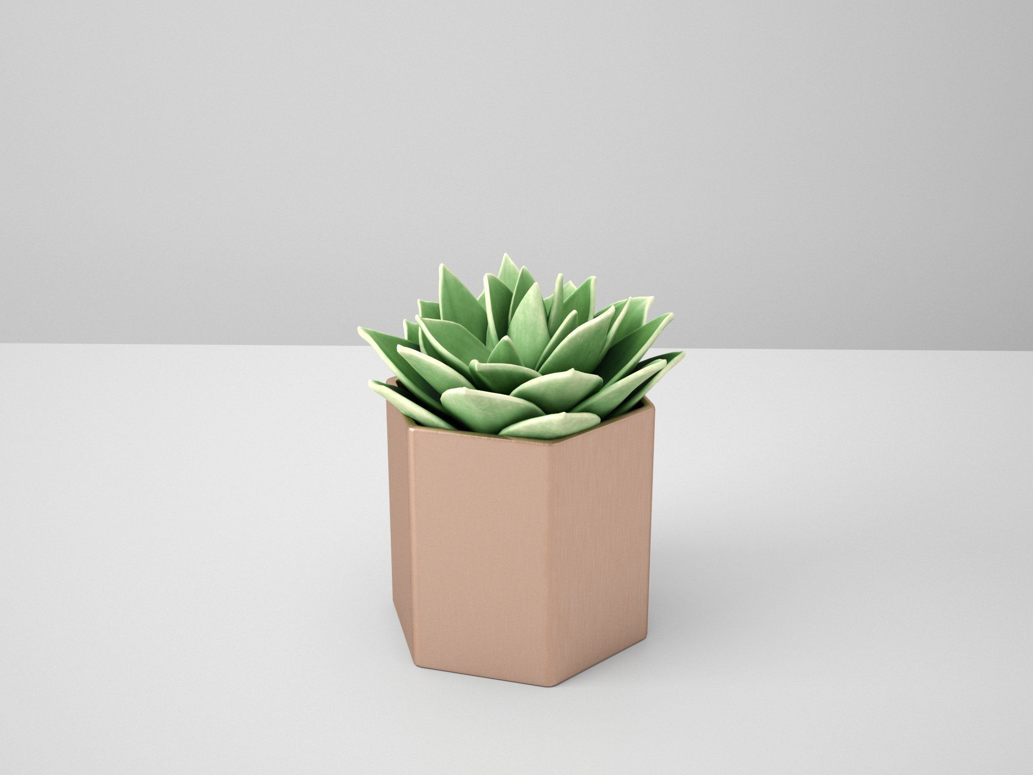Succulent Echeveriar Star Copper Potted Cactus