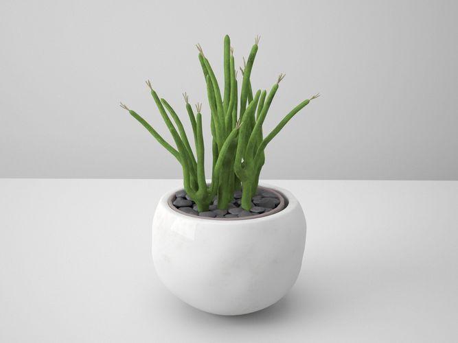 snake white potted cactus 3d model obj mtl fbx ma mb 1
