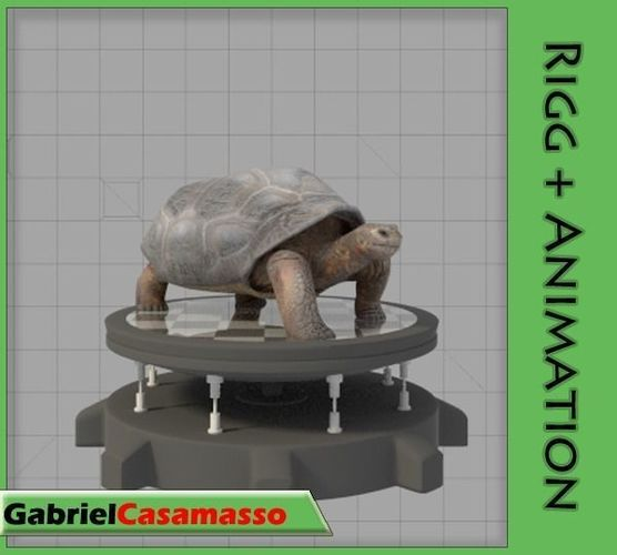 galapagos-tortoise 3d model fbx blend 1