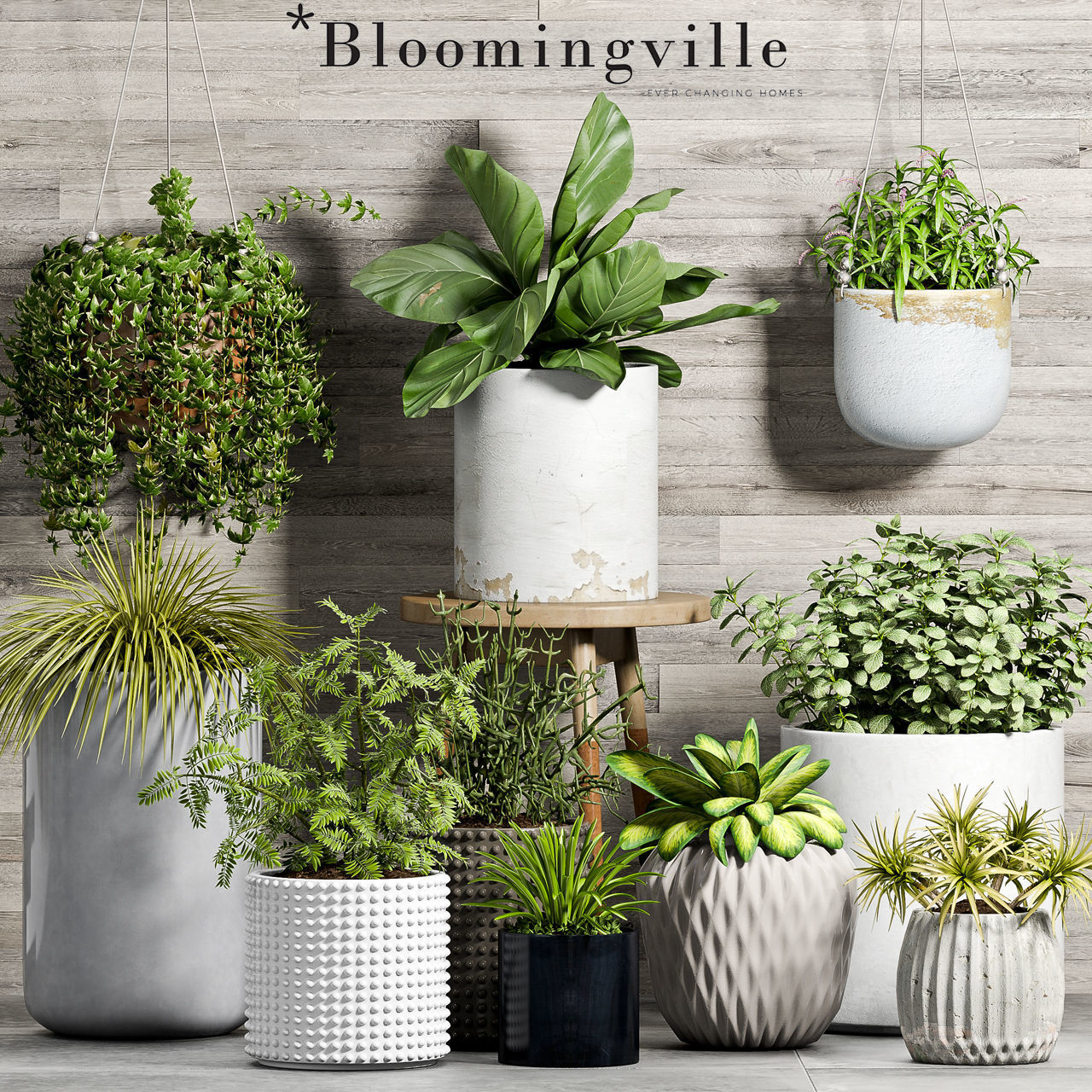 Decorative plant set-52