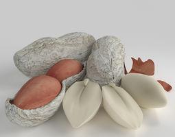 3D model Realistic Peanut