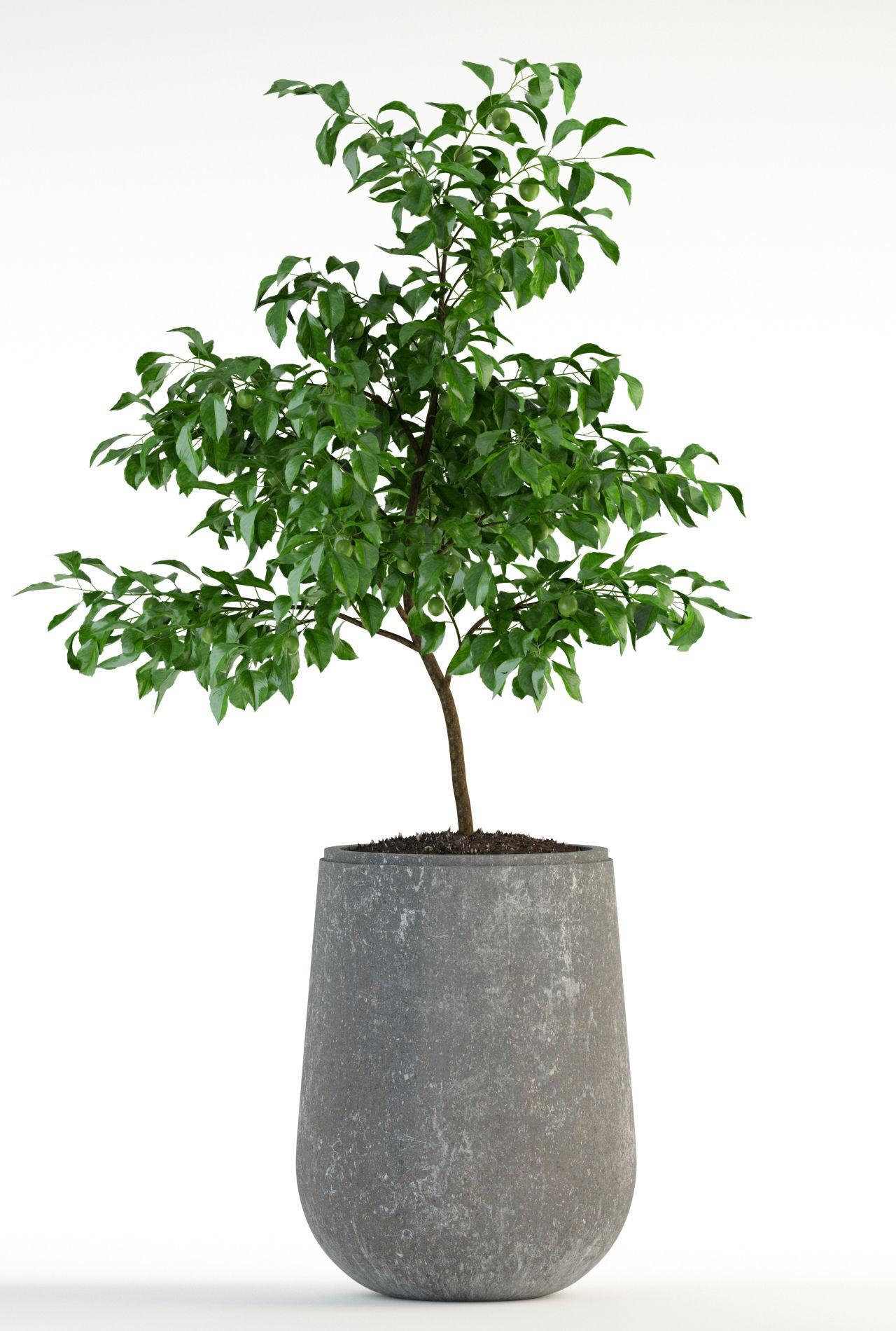 ... Plants Collection 82 Garden Life Pots 3d Model Max Fbx 2 ...