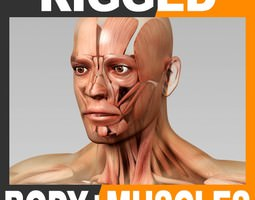 rigged human male body and muscular system 3d model ma mb