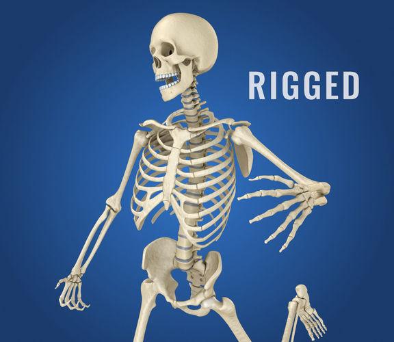 human skeleton 3d model 3d model max obj mtl fbx stl tga 1