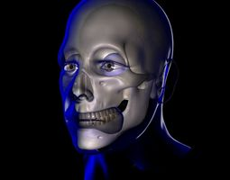 3D model human X-Ray Male Face Unrigged