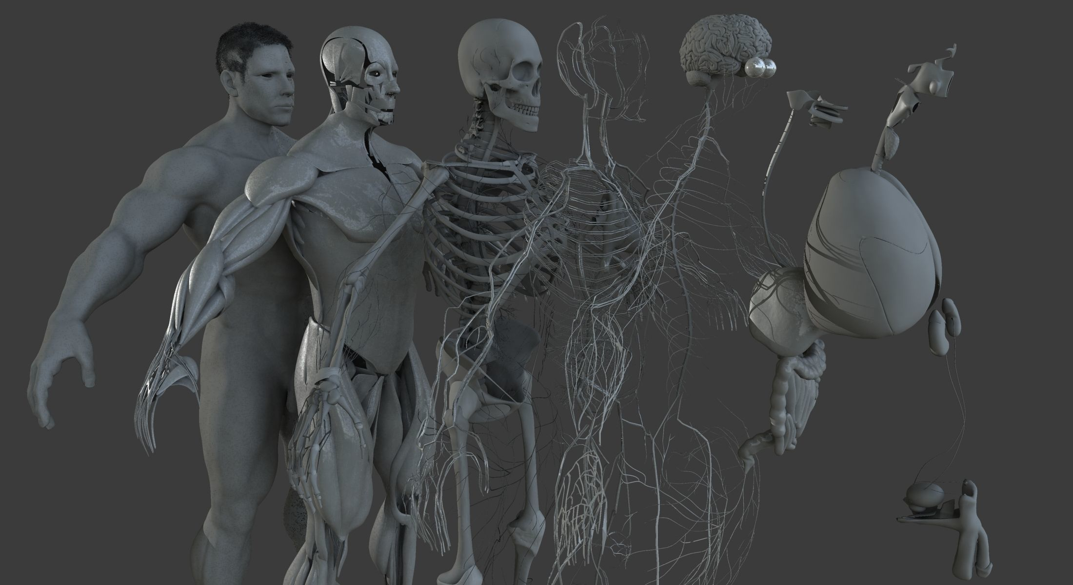 Ultimate Male Anatomy Project 3D | CGTrader