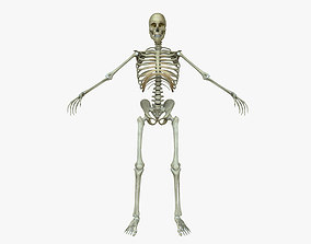 3D Male Human Skeleton