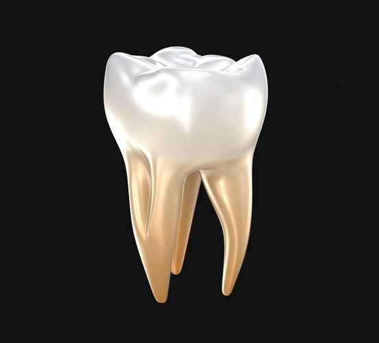 human molar tooth 3d model cgtrader