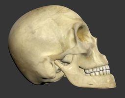 parts 3D Human Skull