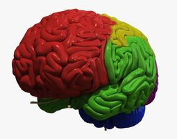 3D lobe Human Brain Regions