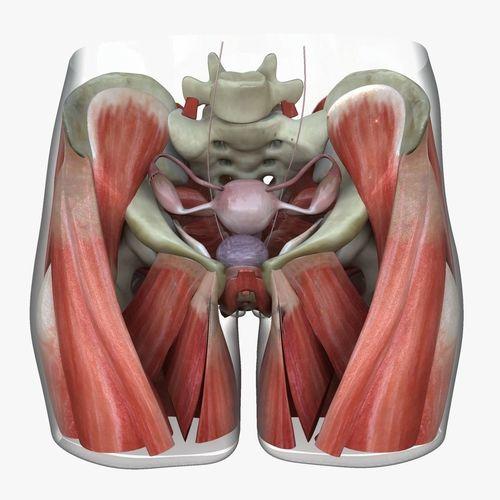 detailed female reproductive system medical edition 3d model obj mtl ma mb mel 1