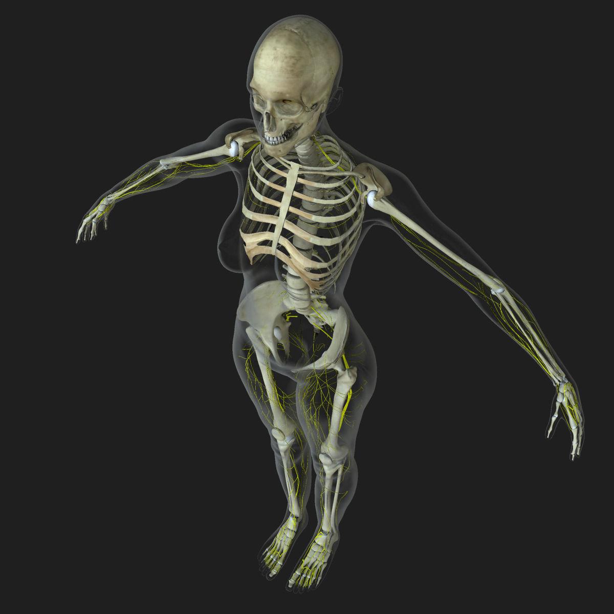 Central Nervous System with Skeleton Female