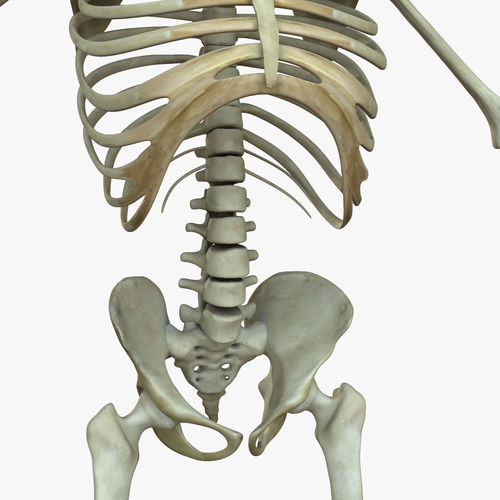 Muscular African American Male With Full Body Skeleton 3D