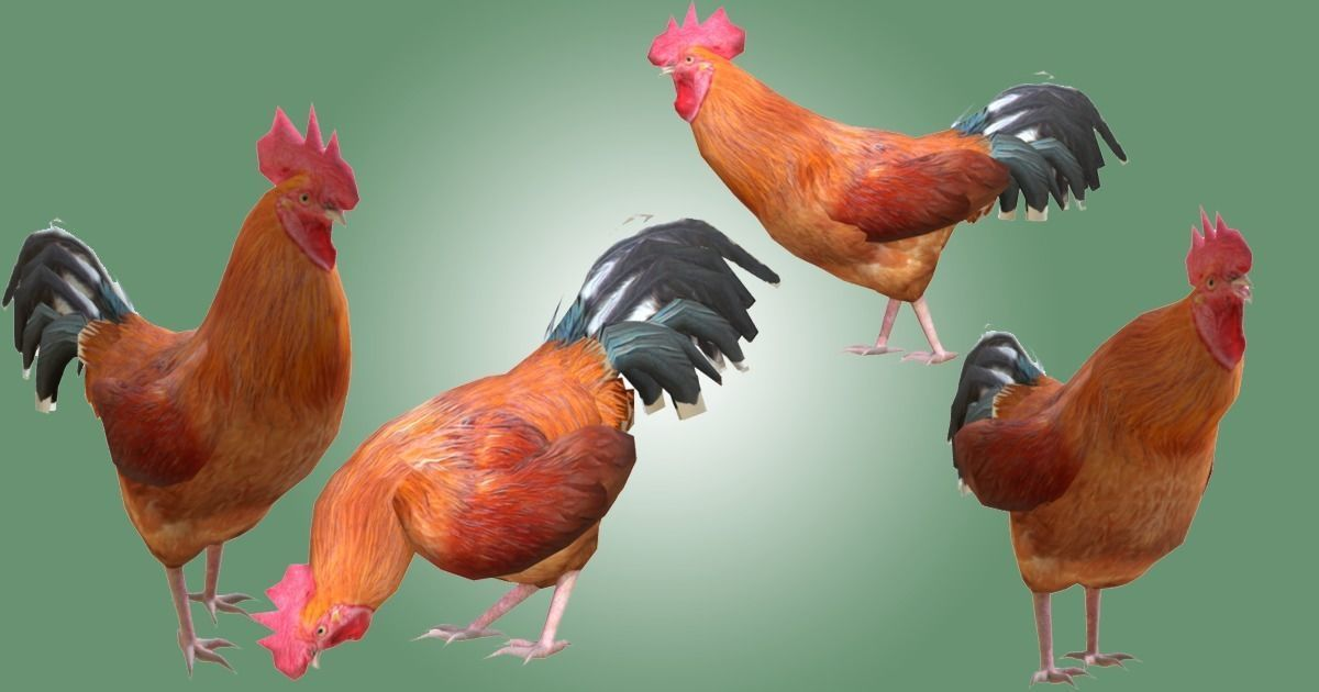 Rooster lowpoly