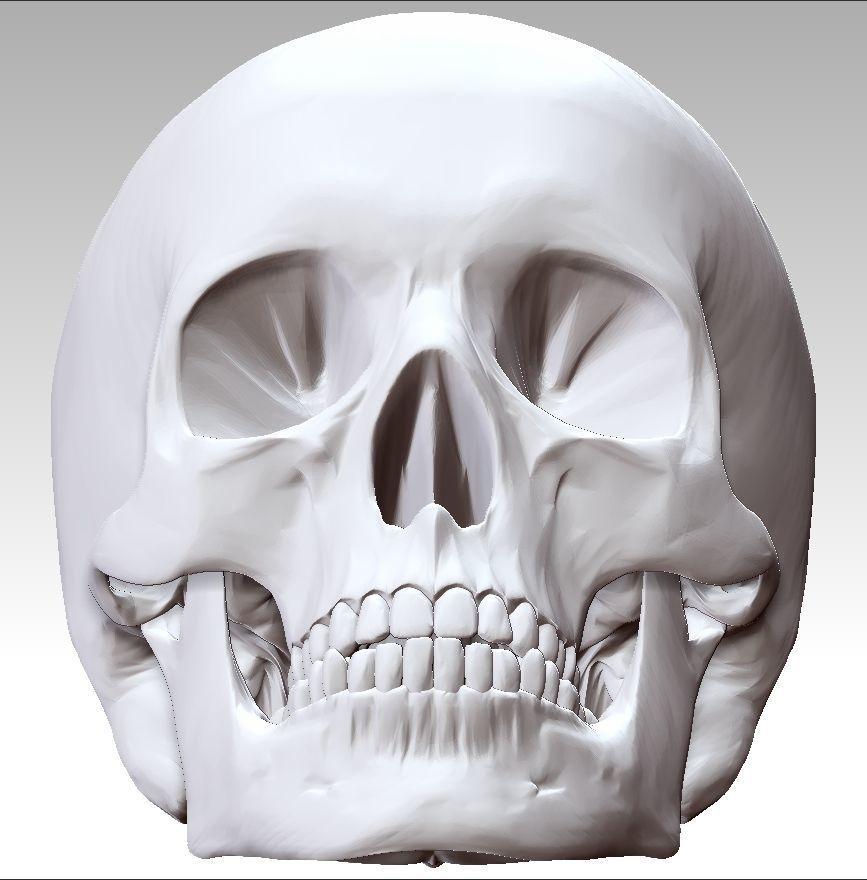 Anatomy Skull 3D printable model   CGTrader