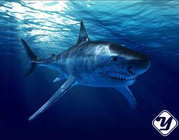 white rigged Great White Shark model