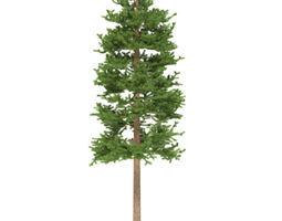 3D model Pine height 15 metre