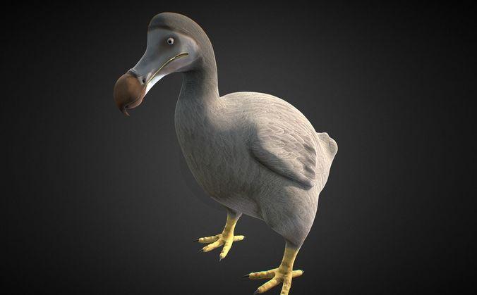 Dodo Bird 3D asset animated | CGTrader