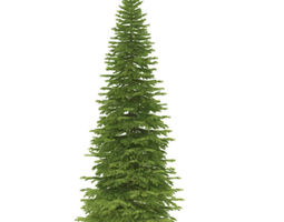 3d spruce height 5 metre