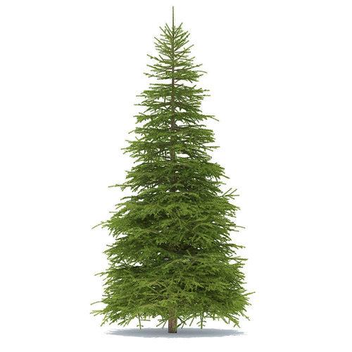 spruce height 9 metre 3d model max obj mtl fbx tga 1