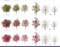 3D model Maple Set Seasons