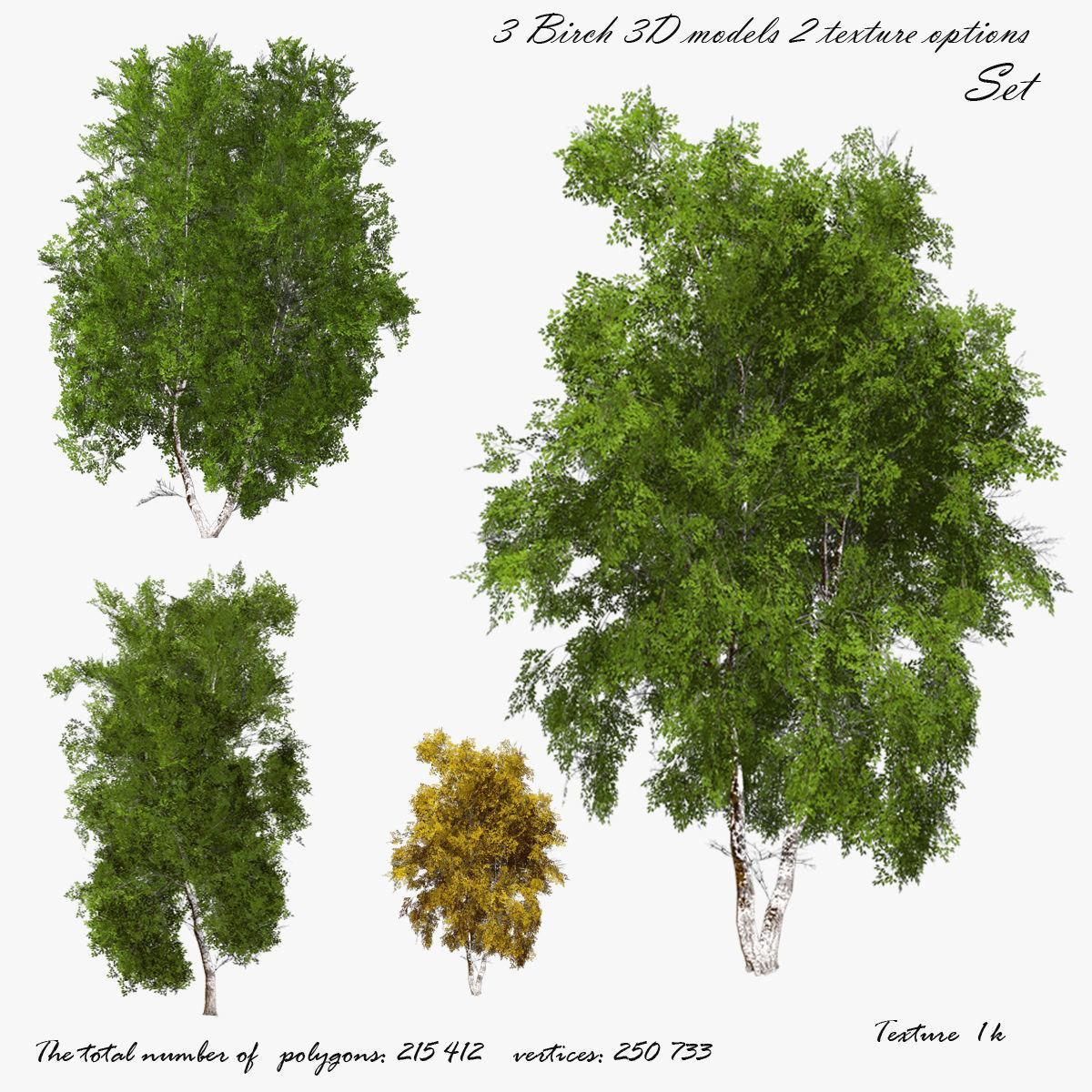 Birch Tree 01