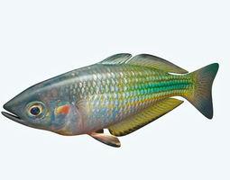 Rainbow Fish 3D model