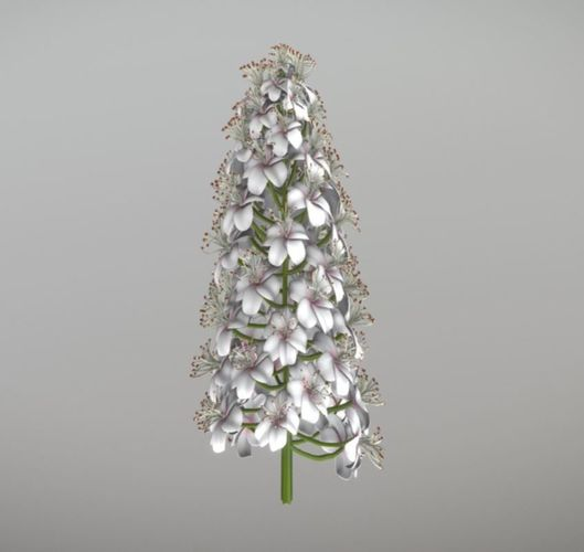 Chestnut Blossom Low-Poly