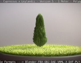 Cypress - Cupressus x Leylandii - Version 5 - 1 3D model