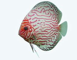 Discus Fish 6 3D