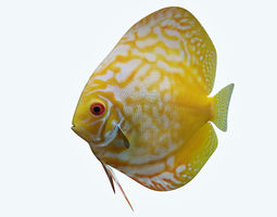 3D Discus Fish 8