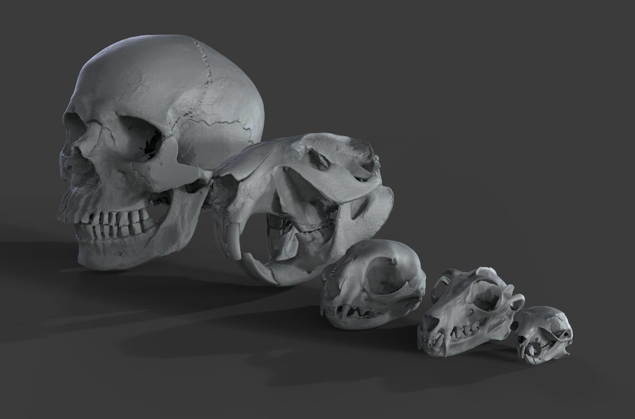 Scanned Skulls Various