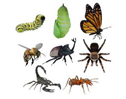 3D model Insects Pack Ultra