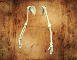HUMAN HANDS 3D model