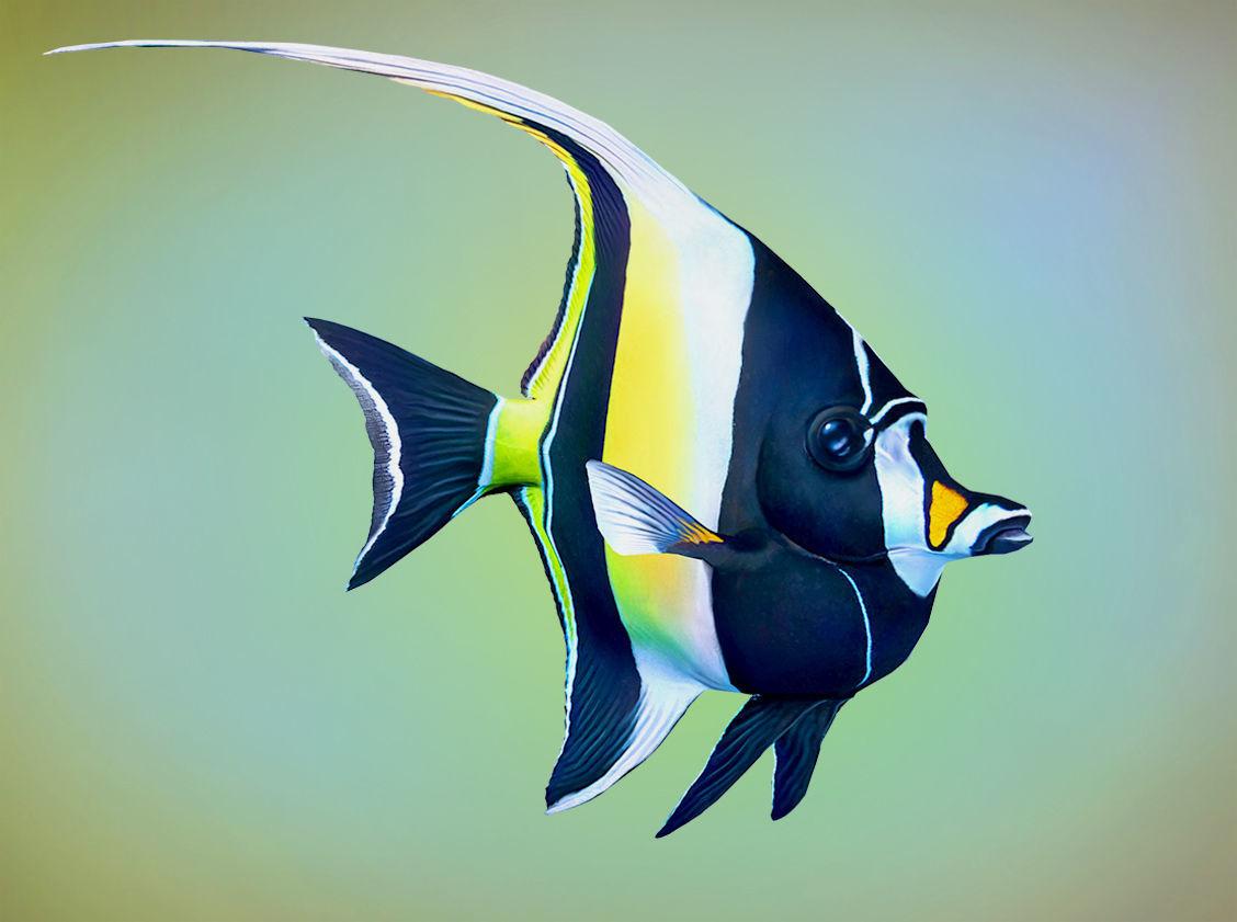 Fish Zanclus Cornutus
