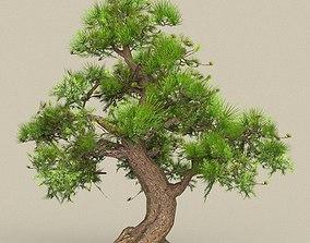 Low Poly Tree 06 3D asset