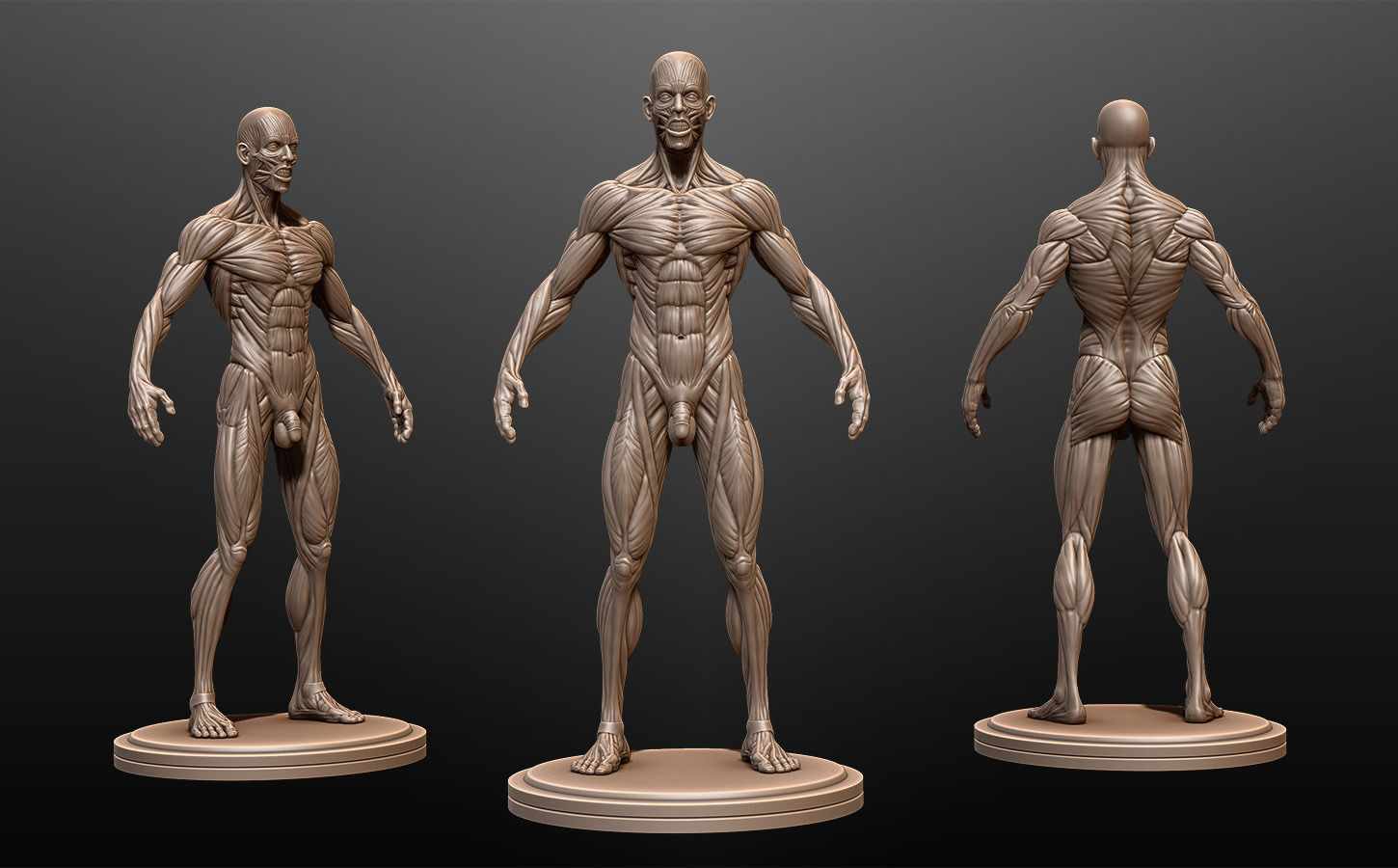 Male Anatomy Ecorche 3D model | CGTrader