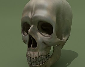 Skull 3D model anatomy