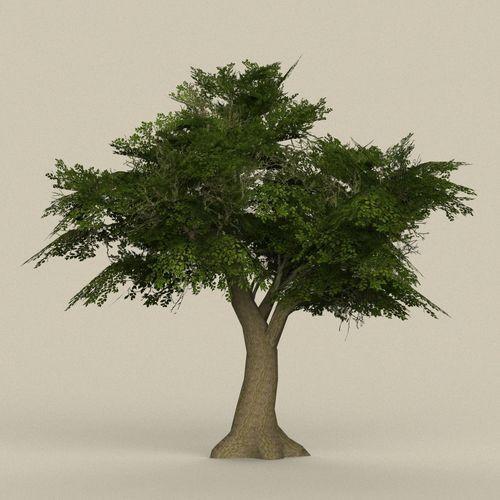 game ready tree 08 3d model low-poly max obj mtl fbx c4d ma mb 1