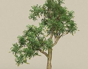 Game Ready Tree 10 3D model