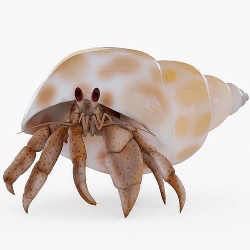 hermit crab with hair 3d model obj mtl 3ds fbx stl blend 1