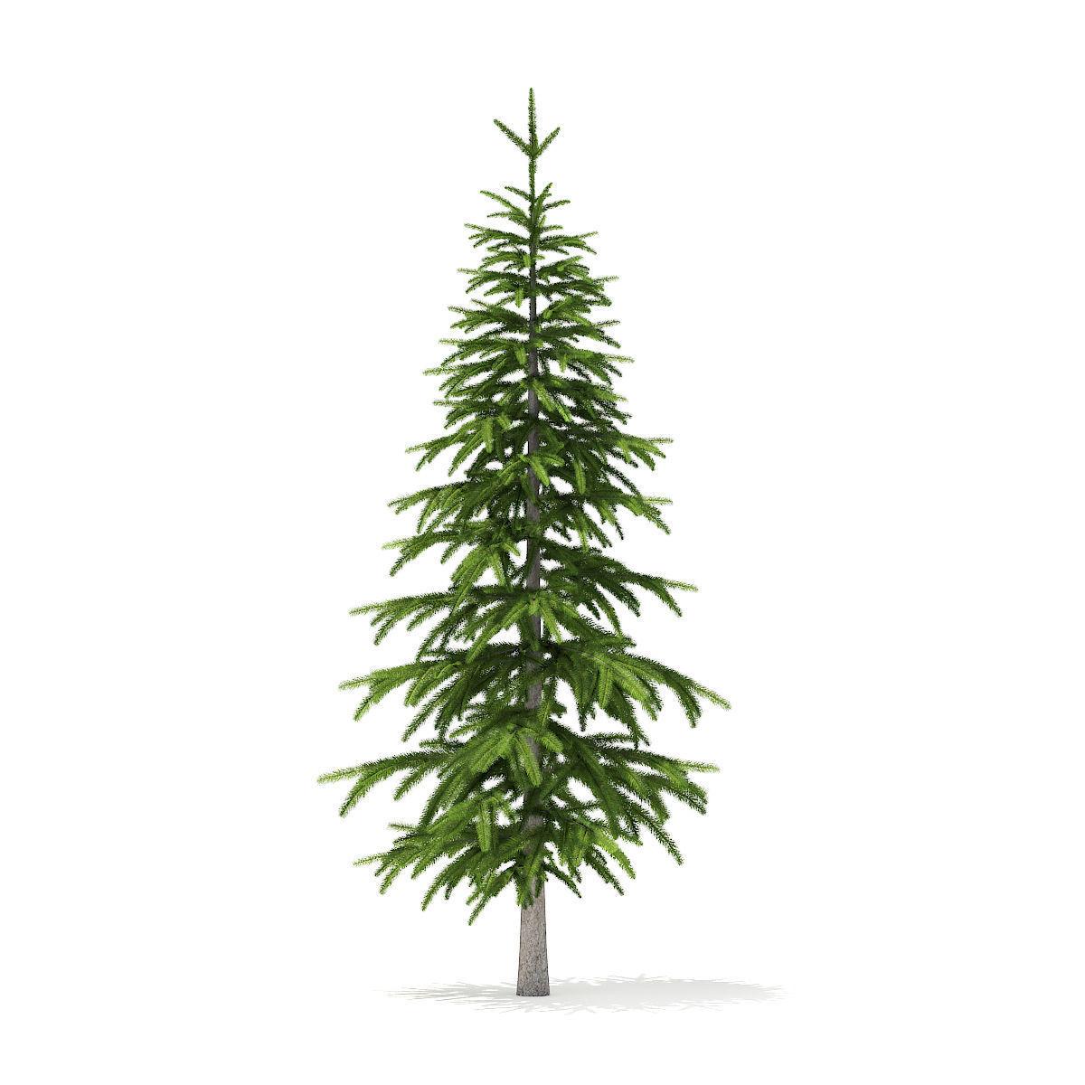 Fir Tree 2point6m   3D model