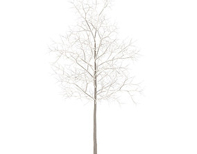 3D Sugar Maple with Snow 2point9m