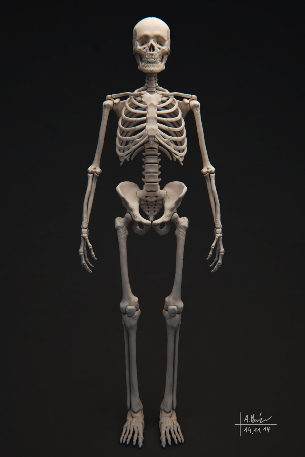 human skeleton 3d model obj tga, Skeleton