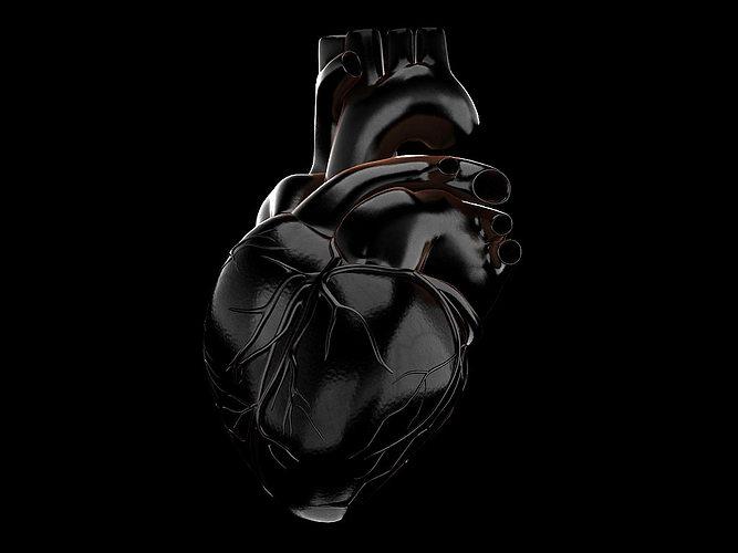 Human heart std mat 3D Model MAX MAT | CGTrader.com