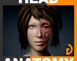 Human Female Head Anatomy 3D Model