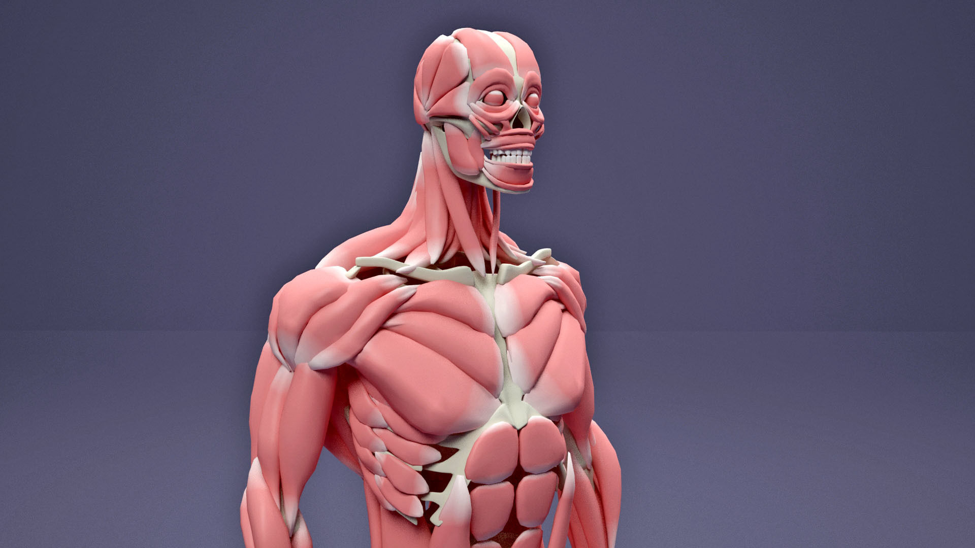 Muscular and Skeletal Systems Of Human Body