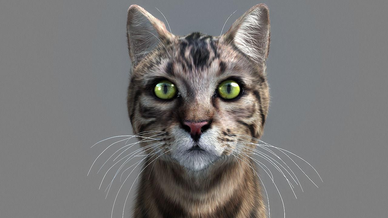 Cat--