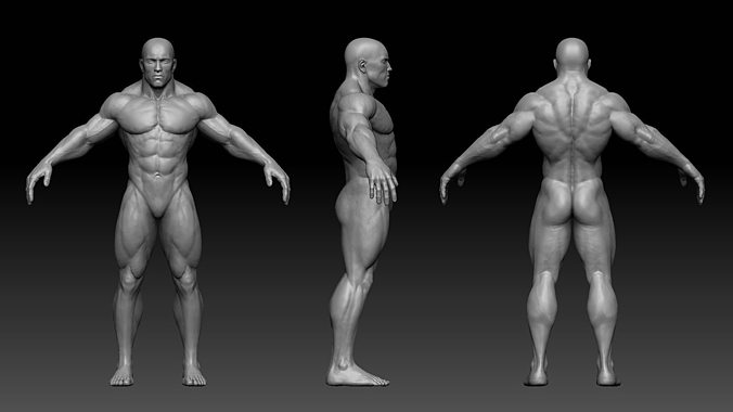muscular male body 3d model low-poly obj fbx ztl 1