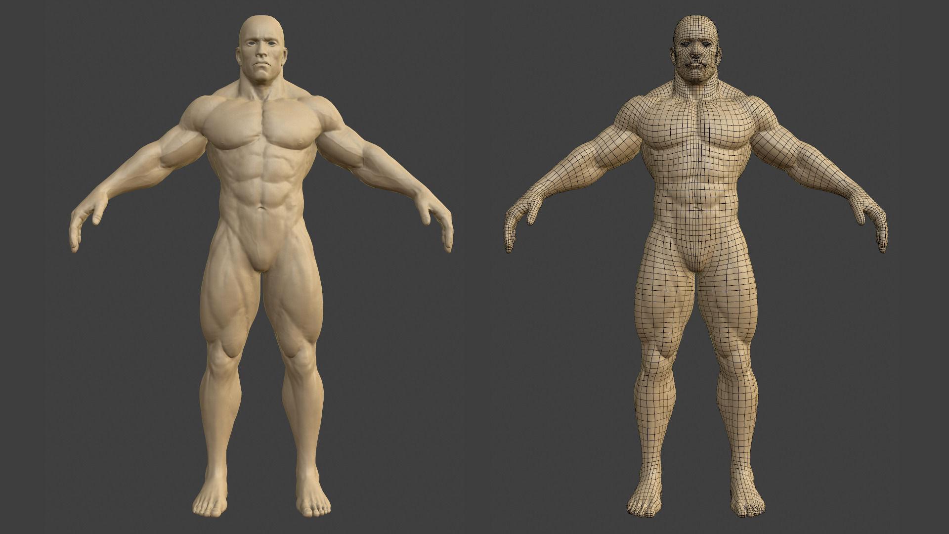 3d model muscular male body vr / ar / low-poly obj fbx ztl, Muscles